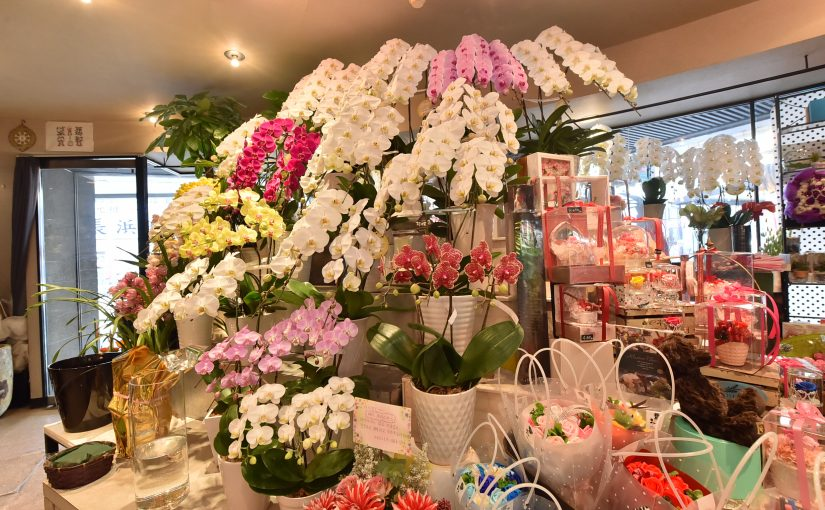 Flowers Qtane