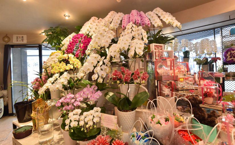 Flowers 큐타네